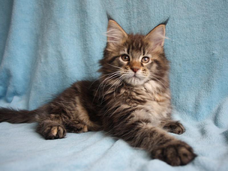 Garfield's Baby Maine ...